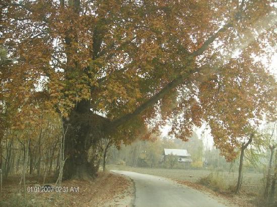 Wular Lake : On the way to Wullar lake