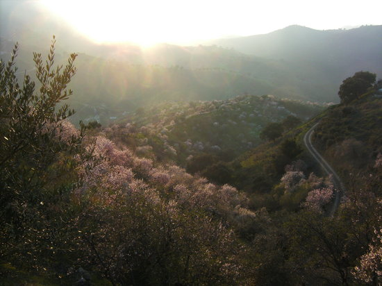 Monte Aventura, Andalucia Ecotours: Sunset over Almond Grove