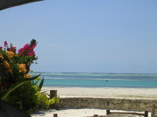 Mvuvi Resort : Mvuvi beach
