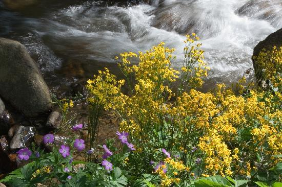 Moonshine Creek Campground: Wildflowers on the Creek