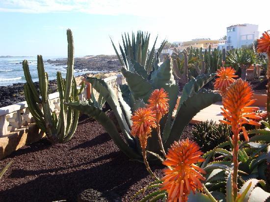 Fuerteventura, Spania: Corralejo - un giardinetto