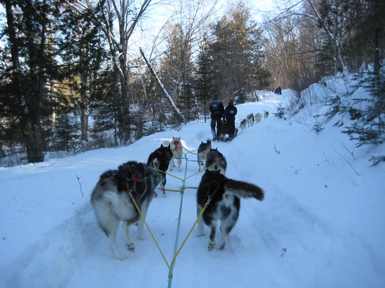 Riviere-Rouge, Canada : Dog Sledding 1 (Feb. 2011)