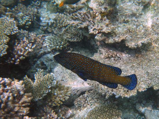Ellaidhoo Maldives by Cinnamon: go snorkelling
