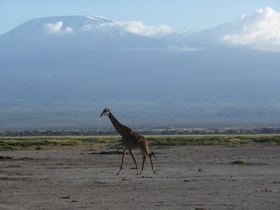Amboseli Sopa Lodge: Kilimanjaro provides stunning backdrop
