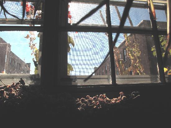 Magnolia: Window