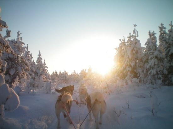 Salla Ski Resort: husky tour we love it