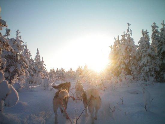 Salla Ski Resort : husky tour we love it