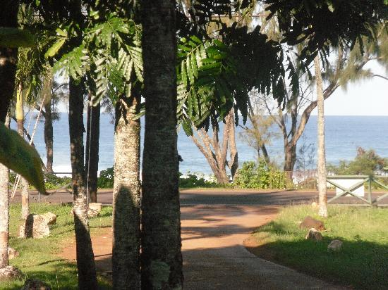 Backpackers Vacation Inn and Plantation Village: View from the Hostel
