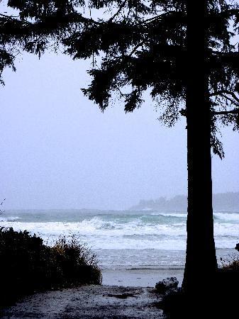 Tofino Trek Inn: Beach, just down the road...