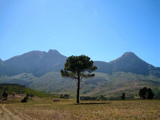 Lalapanzi Lodge: what a view