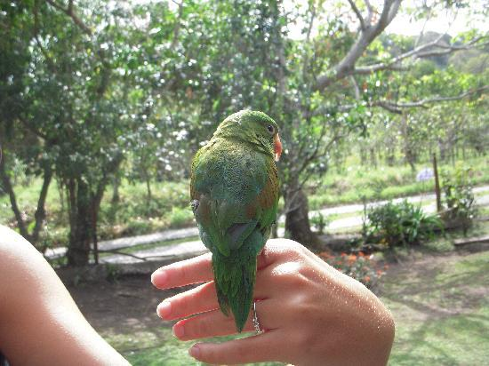 Casa Pedro: The family's bird. They also have a dog and a rabbit, all sweet animals.