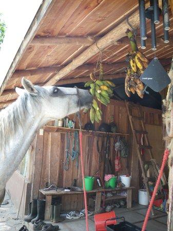 Barking Horse Farm