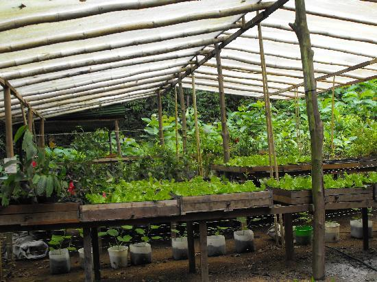Self Sustainable Backyard : Villas Rio Mar self sustaining vegetable garden
