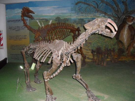 Museo Argentino de Ciencias Naturales Bernardino Rivadavia: 1