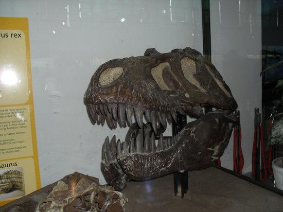 Museo Argentino de Ciencias Naturales Bernardino Rivadavia