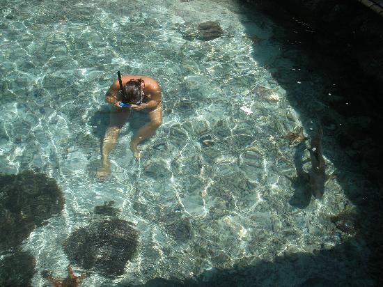 Pak Cuming Rooms: piscina con squaletti e tartarughe