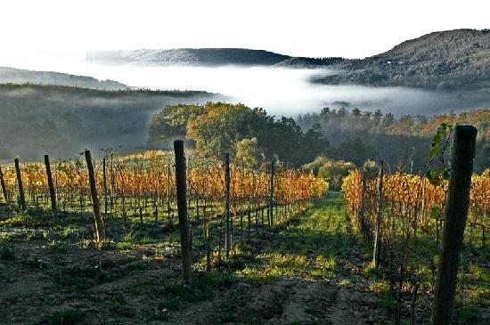 Agriturismo Podere Lamberto: La vigna del Vino Nobile