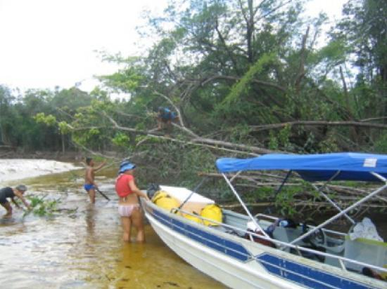Amazon Mystery Tours: Expect the unexpected- Fallen tree blocking our boat!