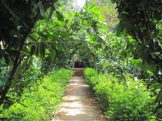 Saree Samui: Garden walkway