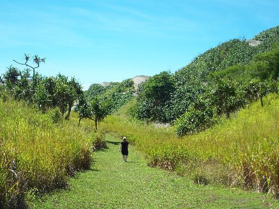Sigatoka Sand Dunes National Park: On the trail to the dunes