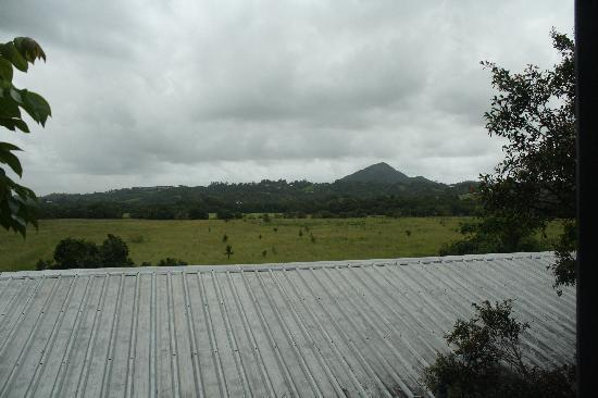 Eumundi Gridley Homestead B&B: View over flood plains from balcony.