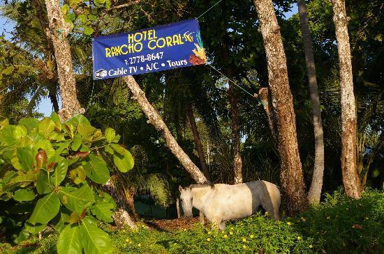 Hotel Rancho Coral: wild horse