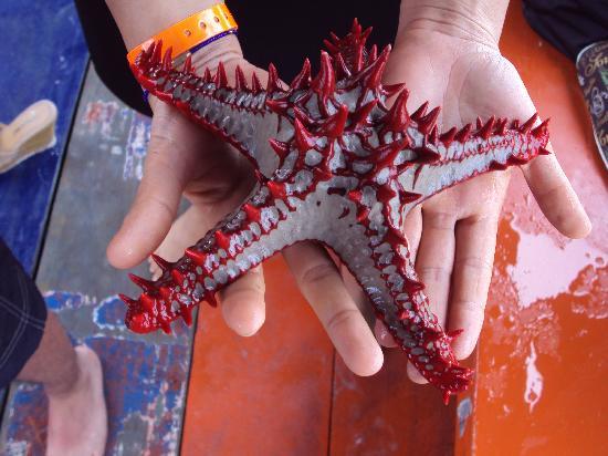 Sandies Tropical Village: stelle marine