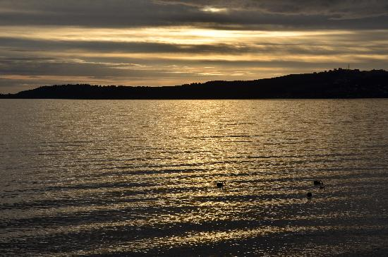 Sacred Waters Taupo Luxury Apartments : Sunset and swans