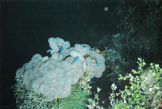 Truk Lagoon: Rich marine life