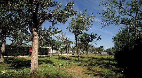 Camping Classe Village : Le piazzole del camping classe