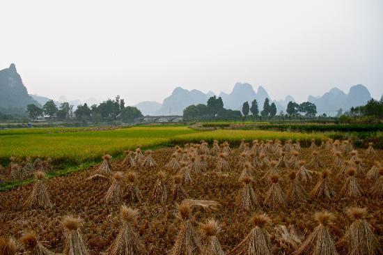 Γκουιλίν, Κίνα: Rizière à Guilin