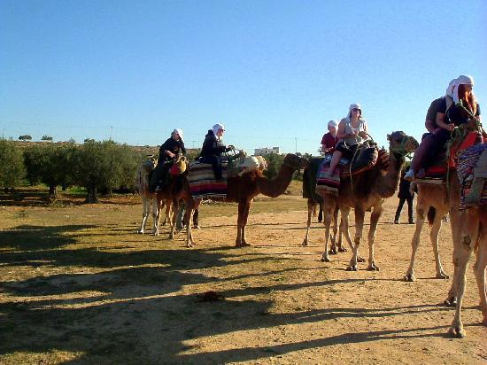 Sahara Beach Aquapark Resort: Camel trip