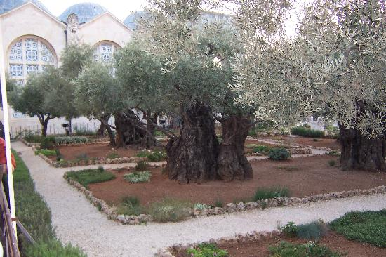Midnight Biking Through Jerusalem: Garden of Gethsemene