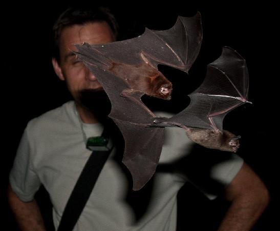 Nature Trekking: Bats