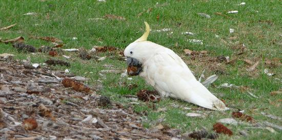 Real Sydney Tours : Sulphur crested cockatoo we saw on our travels