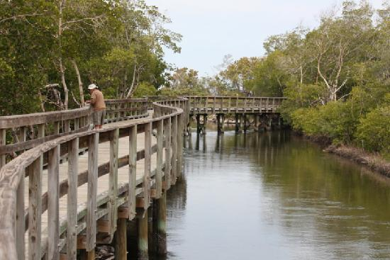 Robinson Nature Preserve : A bridge along the mangroves at Robinson Preserve