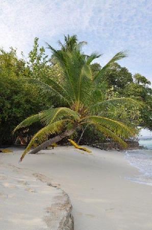 Embudu Village: Strandfeeling pur