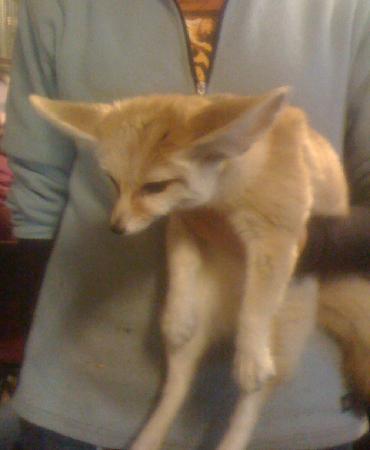 Nemacolin Woodlands Resort & Spa: fox at animal center