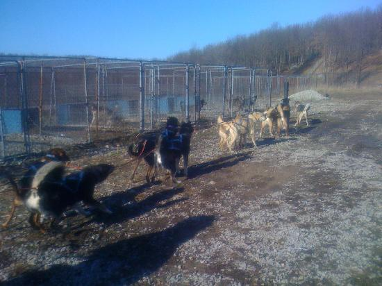 Farmington, Pennsylvanie : dog sledding