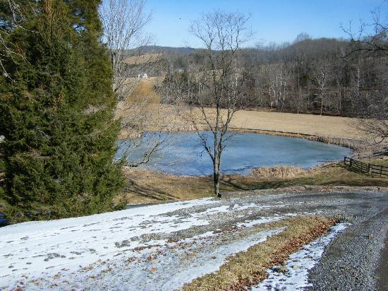 Creekside Resort and Spa: The farm pond.