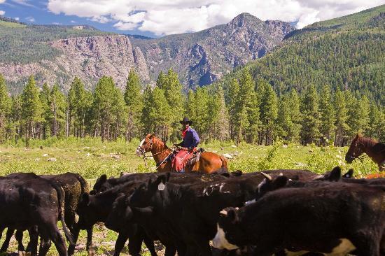 Wilderness Trails Ranch: Cattle 101