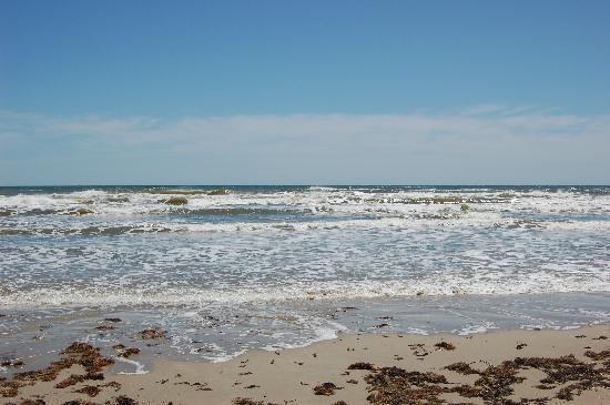 Padre Island National Seashore: The beach and sea weed