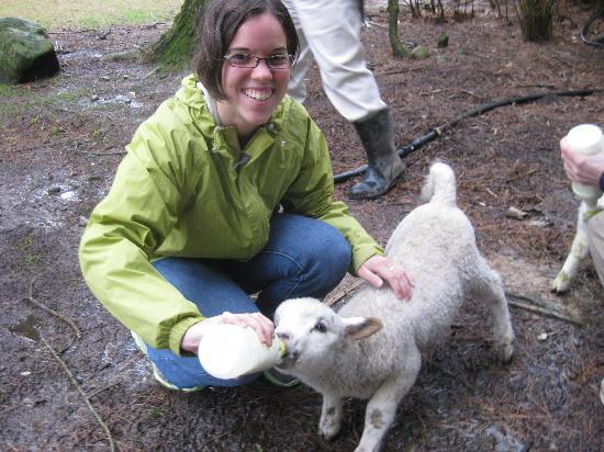 Hielan House Countrystay B&B: Feeding the lambs