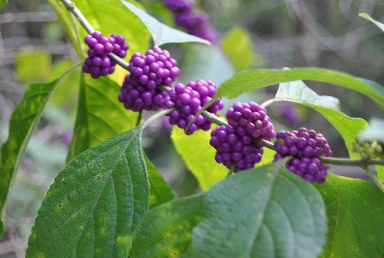 Fern Forest Nature Center: Berries