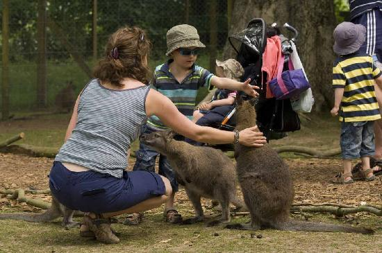Manor Wildlife Park: Wander with the Wallabies
