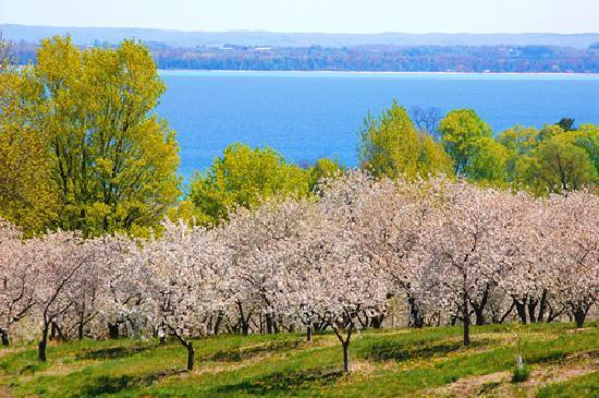 Τράβερς Σίτι, Μίσιγκαν: Cherry blossoms in Traverse City