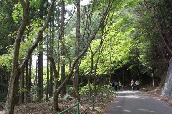Shinshiro, Japan: 新緑の参道