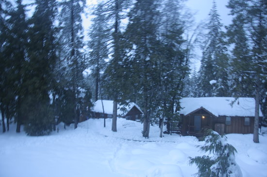 Evergreen Lodge at Yosemite Restaurant : view of the cabins
