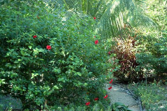 Casa Valentina: Giardino