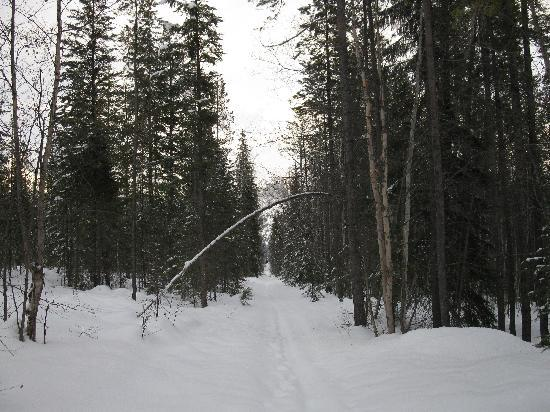 'eh' Canadian Lodge: One of the many hiking/ski trails on the property.